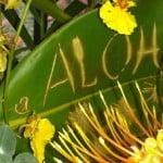 Aloha Still Life 3:14